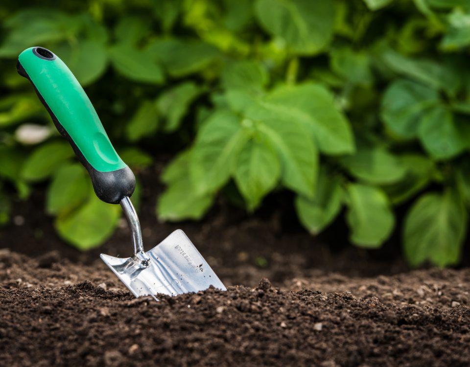 Seedart projektowanie ogrodów